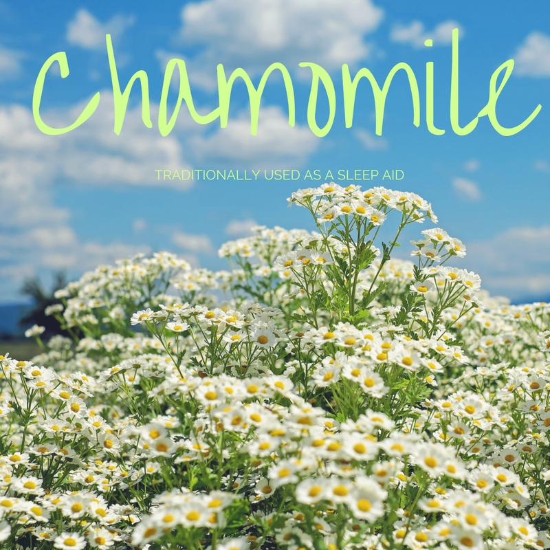 What Are The Benefits of Drinking Chamomile Tea